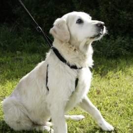 MAXI LEADER tréning kutya hám