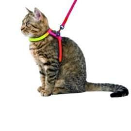 Szivárvány színű macska hám pórázzal
