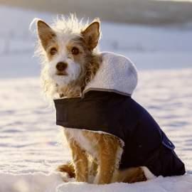 TEDDY téli kutyakabát kapucnival