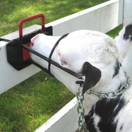 Borjú rögzítő fej kaloda állatorvosi kezeléshez