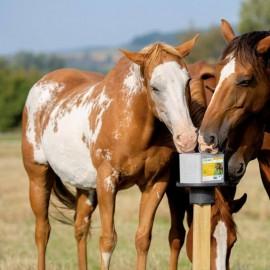 Nyalósó MULTI lovaknak